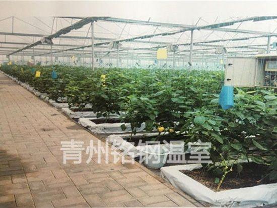 無土栽培價格